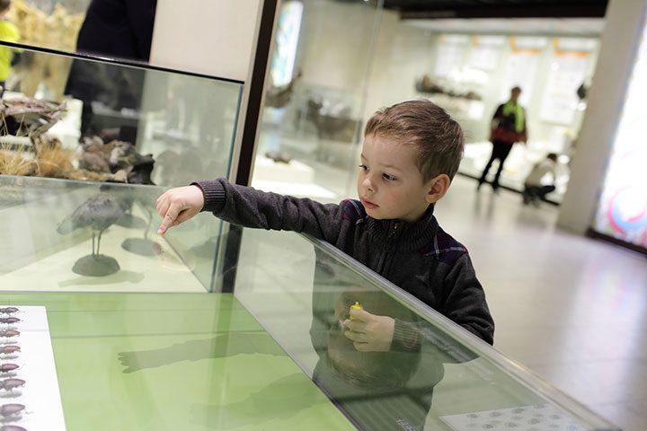 Teche espositive: il loro utilizzo nei musei